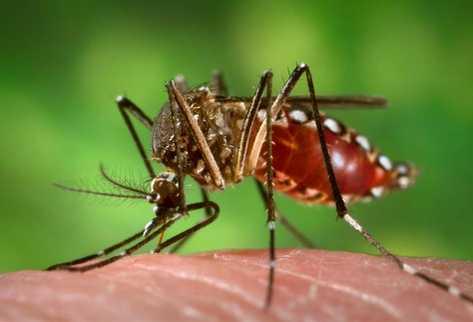Mosquitos-transgenicos_PREIMA20120321_0233_11